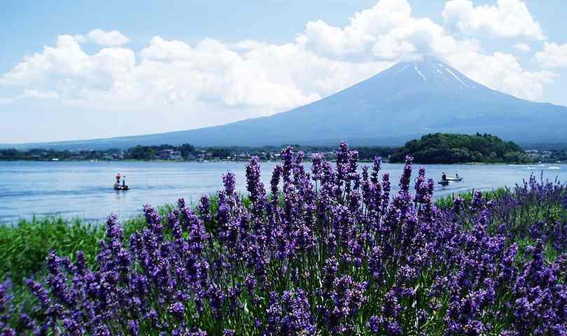 ทัวร์ญี่ปุ่น ว๊าว โอซาก้า โตเกียว เที่ยวทุ่งพิ้งมอส ทะเลสาบคาวากูจิโกะ