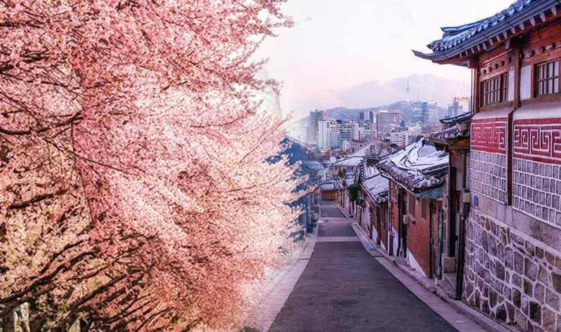 ทัวร์เกาหลี  เกาะนามิ - นักซานซา - เอเวอร์แลนด์ 5วัน 3คืน บิน (LJ)