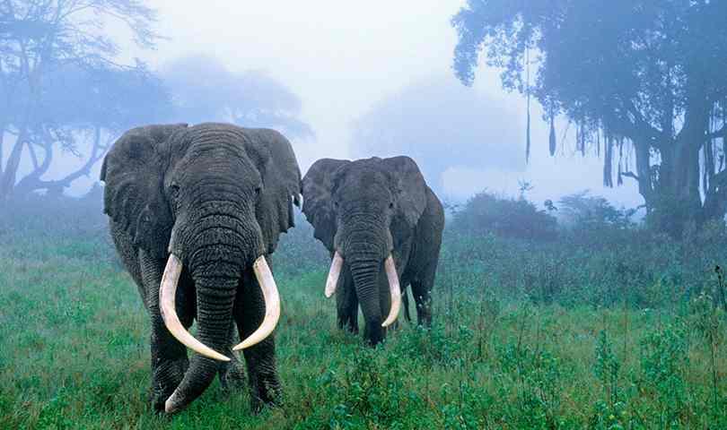 ทัวร์แอฟริกา ตามล่าหาเจ้าป่าแห่งแอฟริกา 8 วัน 5 คืน