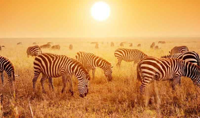 ทัวร์แอฟริกา แทนซาเนีย เคนย่า 8 วัน 5 คืน