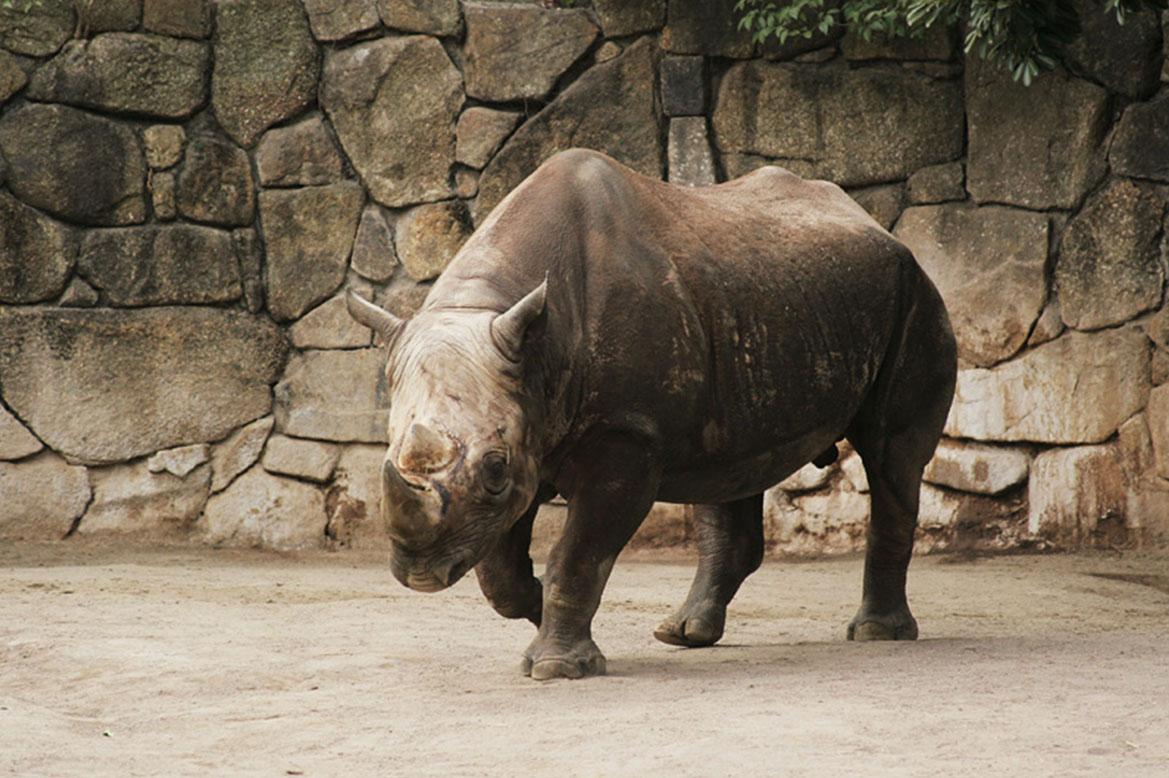 - สวนสัตว์อุเอโนะ (Ueno Zoo) -