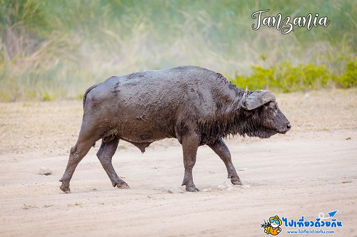 - ข้อมูลเที่ยวเขตอนุรักษ์สัตว์ป่าโกรองโกโร -