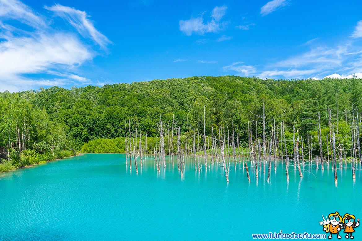 - สระอะโออิเคะ (Aoiike Blue Pond) เมืองบิเอะ (Biei) -