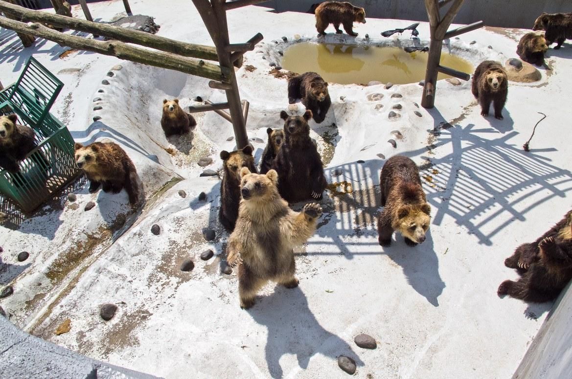 - ศูนย์อนุรักษ์พันธุ์หมีโนโบริเบตสึ -