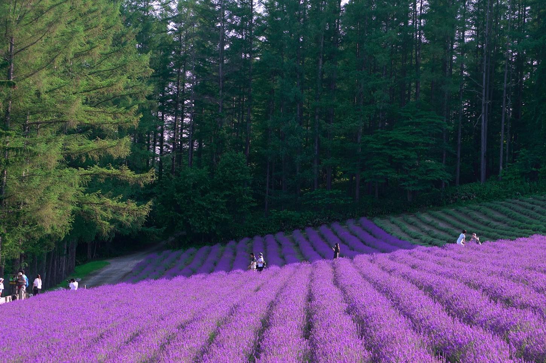 - สวนดอกไม้ชิคิไซ โนะ โอกะ ฮอกไกโด -