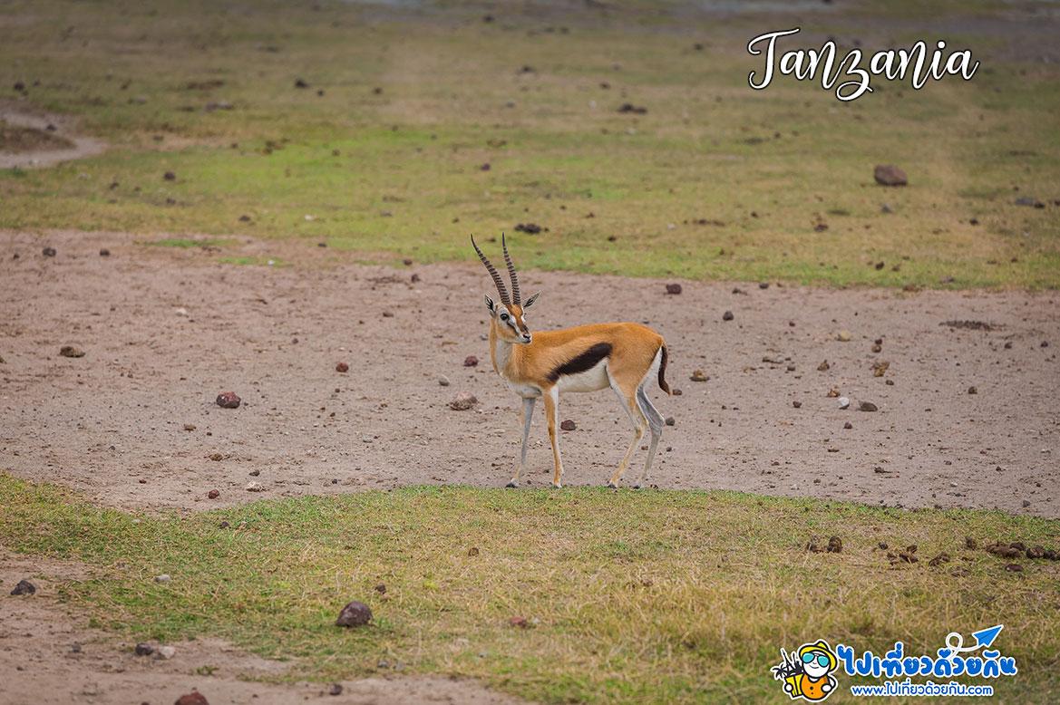 - ค้นหาชีวิตสัตว์ป่าโกรองโกโร -