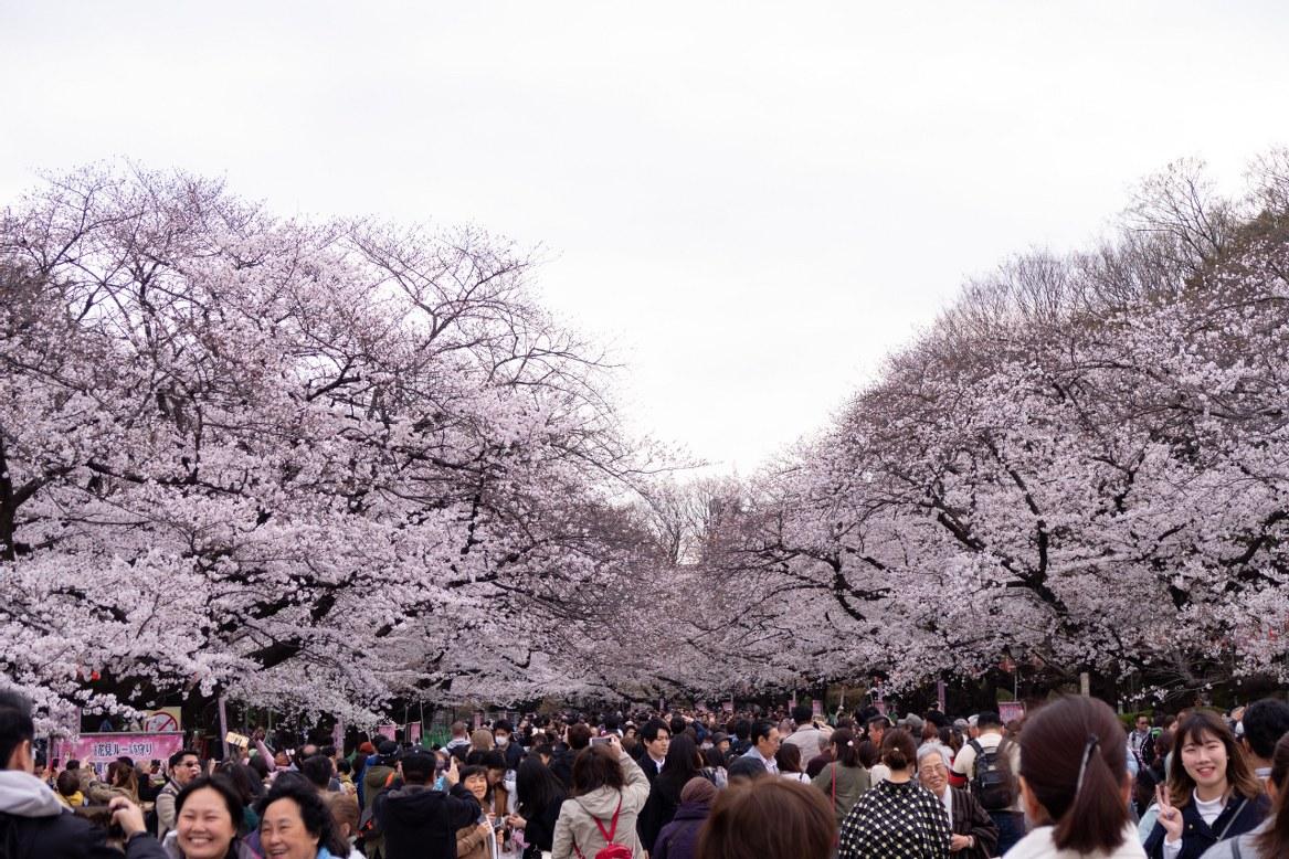 - สวนอุเอโนะ (Ueno Park) -