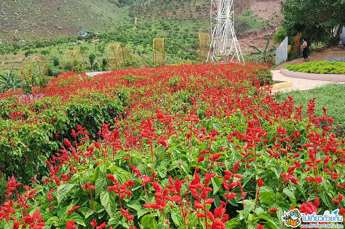 - สวนดอกไม้แฮปปี้แลนด์ หมกโจว -