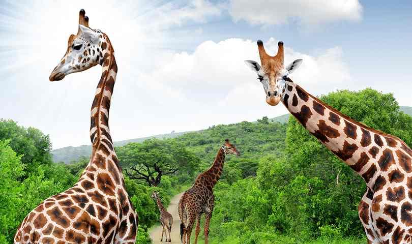 ทัวร์แอฟริกา เที่ยวชม 1 ใน 7 สิ่งมหัศจรรย์ธรรมชาติของโลก 7วัน 4คืน
