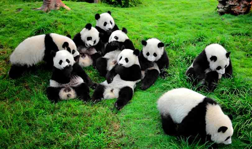ทัวร์จีน จิ่วจ้ายโกว ต้มโคล้ง เฉินตู หมีแพนด้า 5 วัน 3 คืน